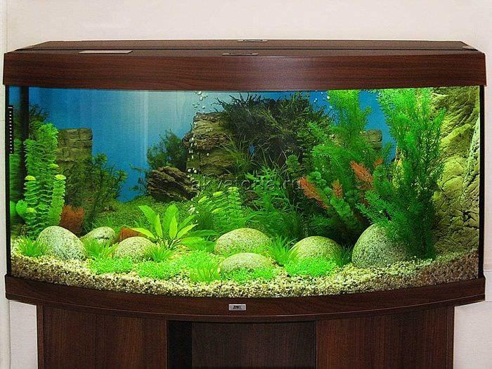 учёные продолжают фото оригинальных аквариумов творожный
