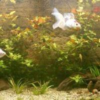 идея необычного украшения аквариума фото