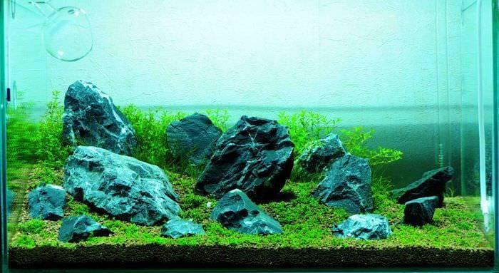вариант необычного украшения домашнего аквариума