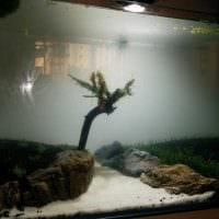 идея оригинального оформления аквариума фото
