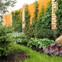 идея применения необычных растений в ландшафтном дизайне дачи фото