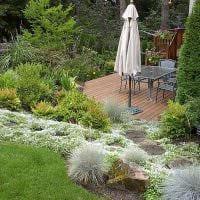 вариант использования необычных растений в ландшафтном дизайне дома фото