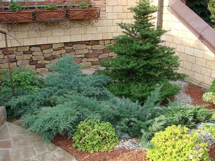 идея использования ярких растений в ландшафтном дизайне дачи