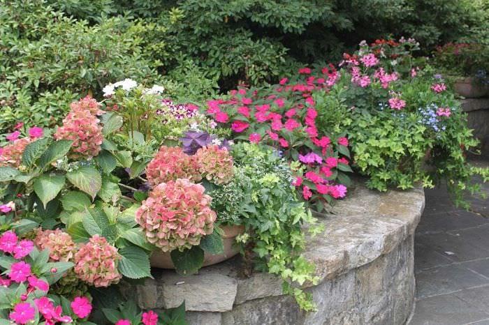 идея использования светлых растений в ландшафтном дизайне дома