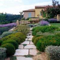 пример применения необычных растений в ландшафтном дизайне дачи фото