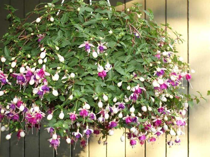 идея применения ярких растений в ландшафтном дизайне дома