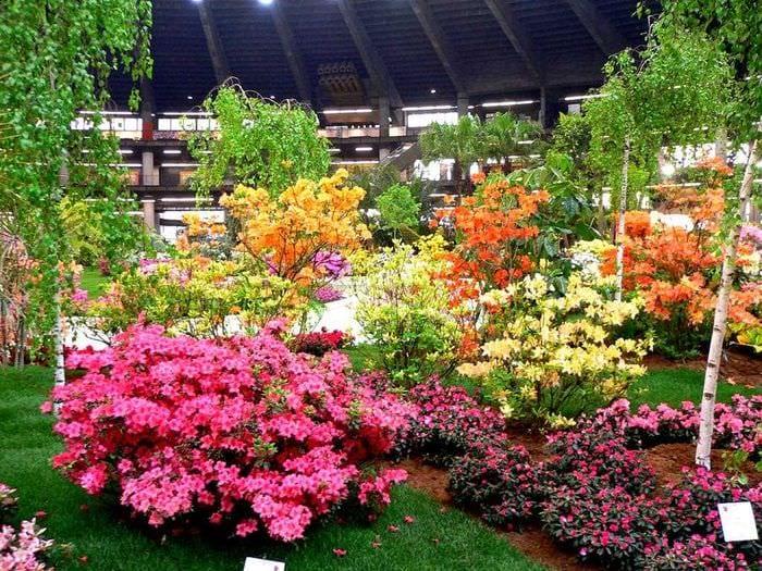 пример использования необычных растений в ландшафтном дизайне дачи