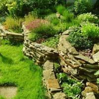 пример применения светлых растений в ландшафтном дизайне дома картинка