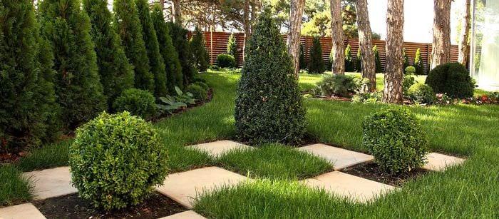 вариант применения светлых растений в ландшафтном дизайне дачи
