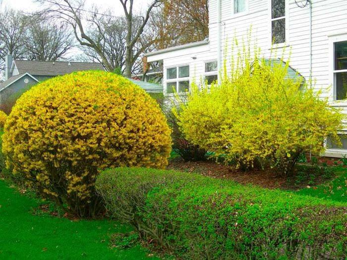 вариант использования необычных растений в ландшафтном дизайне дома