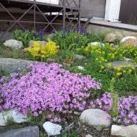 вариант использования красивых растений в ландшафтном дизайне дачи картинка