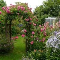 идея использования необычных растений в ландшафтном дизайне дома фото