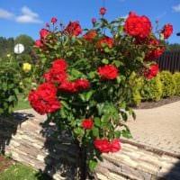 пример использования необычных роз в дизайне двора фото