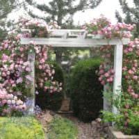 идея применения ярких роз в ландшафтном дизайне картинка
