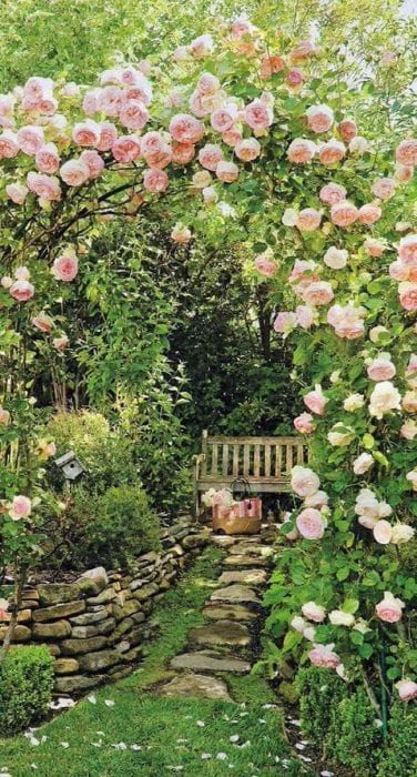 пример применения необычных роз в ландшафтном дизайне