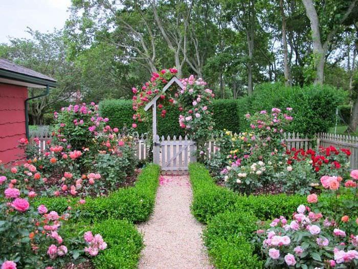 идея применения светлых роз в ландшафтном дизайне