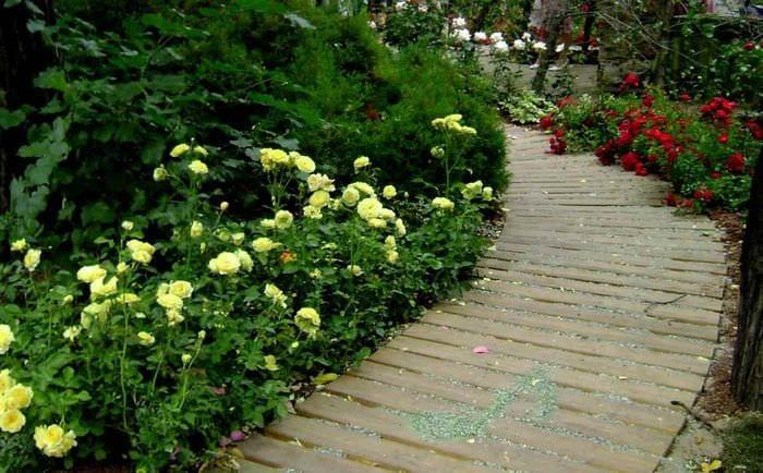вариант использования красивых роз в дизайне двора