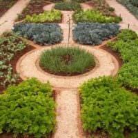 вариант необычного дизайна огорода в частном дворе фото