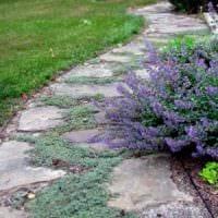 пример использования красивых садовых дорожек в ландшафтном дизайне фото