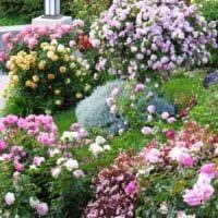 идея использования красивых роз в дизайне двора фото