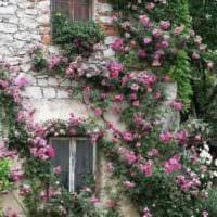 пример применения необычных роз в ландшафтном дизайне картинка