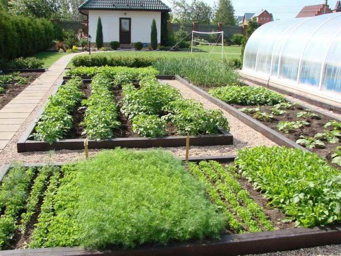 вариант необычного декора огорода в частном дворе