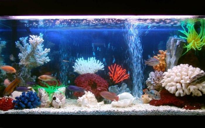 аквариум с ракушками