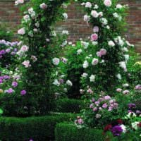 пример использования красивых роз в ландшафтном дизайне картинка