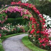 идея использования ярких роз в дизайне двора картинка