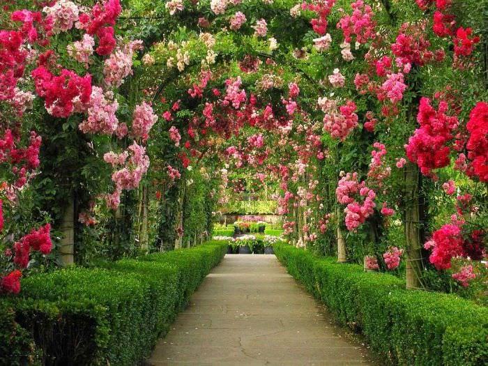 две красивые фотографии цветочных аллей пристройки