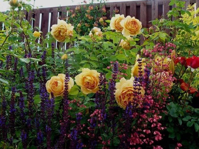 идея применения необычных роз в дизайне двора