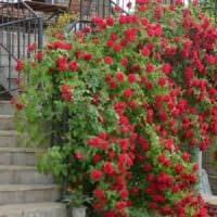 пример использования ярких роз в ландшафтном дизайне фото
