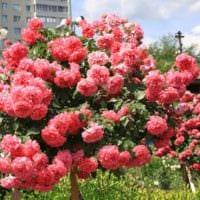 вариант применения красивых роз в дизайне двора картинка