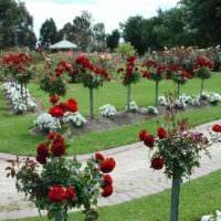 идея применения необычных роз в дизайне двора картинка