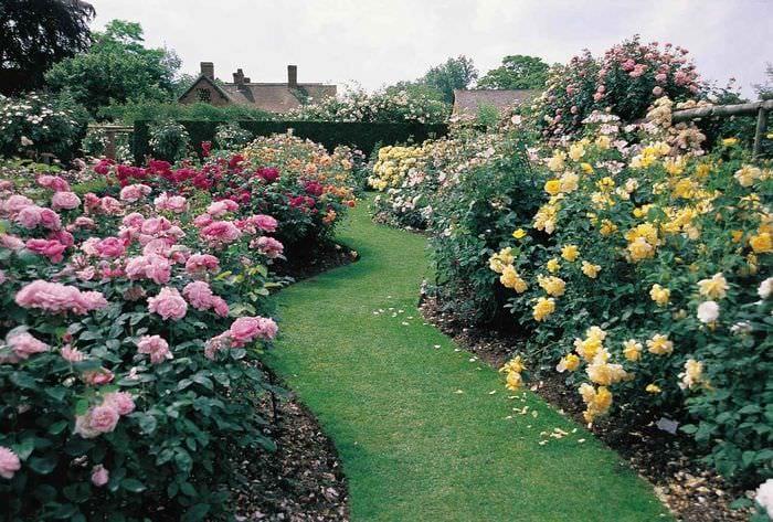 вариант использования ярких роз в ландшафтном дизайне