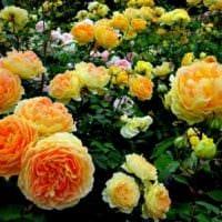 вариант применения ярких роз в дизайне двора картинка