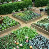 пример светлого декора огорода на даче картинка