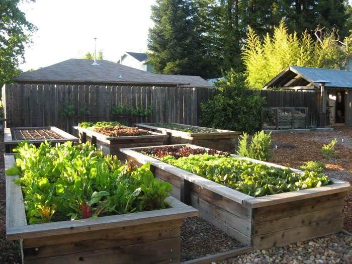 идея светлого декора огорода в частном дворе