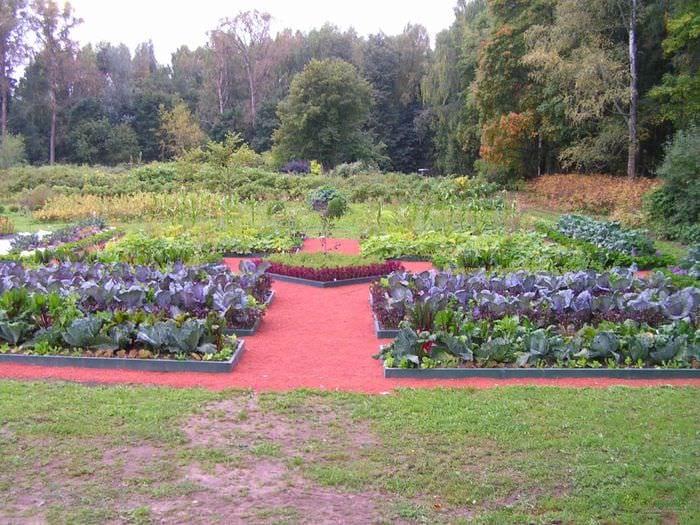 вариант красивого дизайна огорода на даче