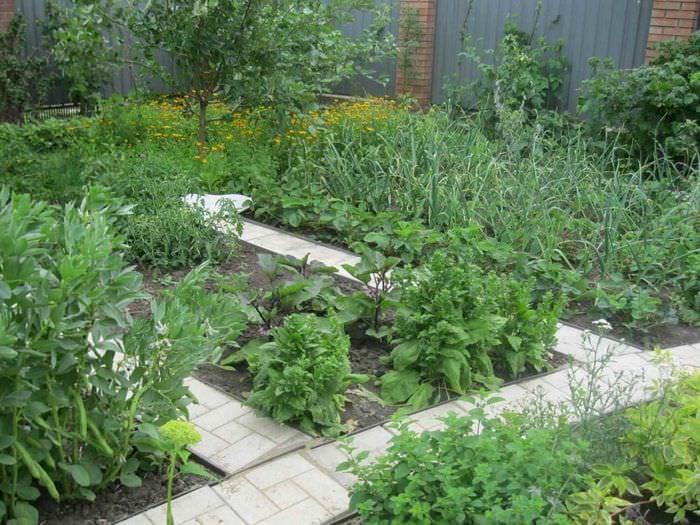 идея необычного дизайна огорода на даче