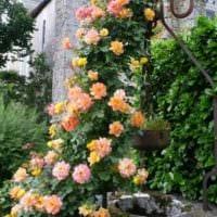 идея использования ярких роз в ландшафтном дизайне картинка