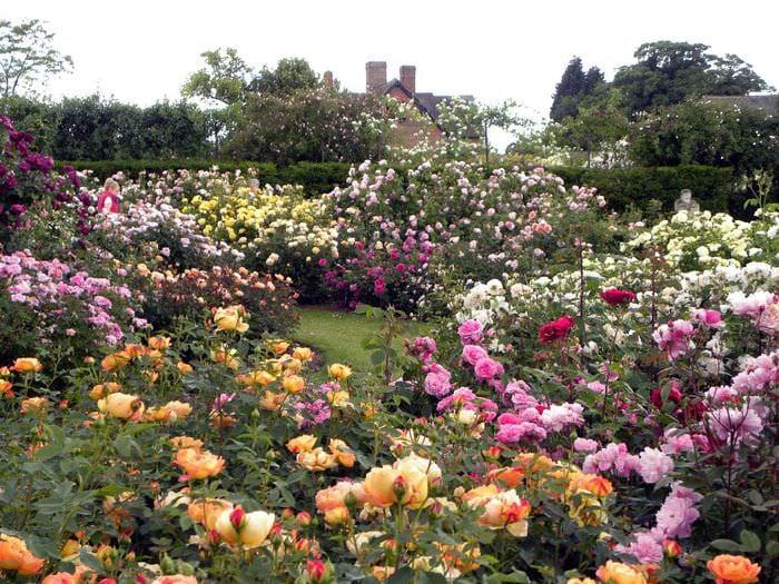 вроде картинки роз в своем саду попыталась бежать попала
