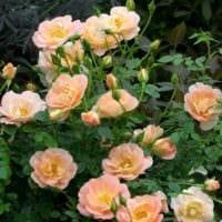 вариант использования ярких роз в дизайне двора фото