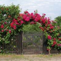 пример применения ярких роз в дизайне двора картинка