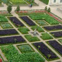 пример красивого дизайна огорода в частном дворе фото