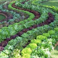 огород с грядками дача дизайн фото