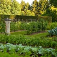 огород с грядками на даче фото