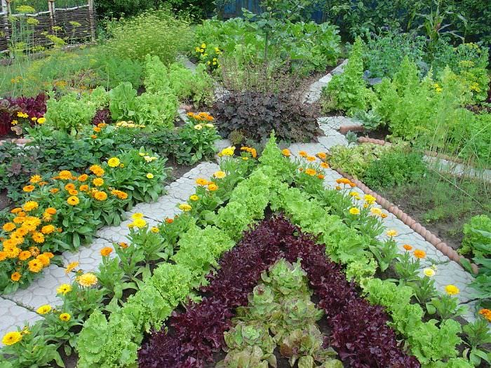 дизайн огорода фото с посадками овощей официально предъявлено