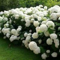 садовый участок 4 сотки дизайн идеи