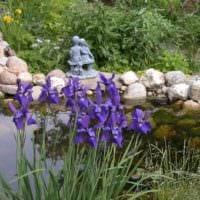 садовый участок 4 сотки фото идеи